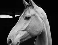 Equestrianlife