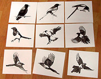Graphic bird sketches