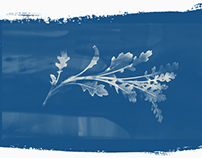 Cyanotype plants