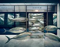 Life of Sardine