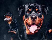 Cartaz Encontro de Rottweilers