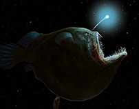 Black Devil Anglerfish | Stuart Jackson-Carter