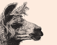 Ilustraciones / Exposición Comer / Comidas Raras