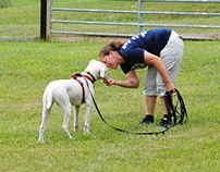 Dog Training for Distractions - Stephanie Taunton