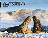 Capturing Behaviour: Courtship