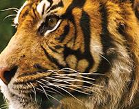WWF The Big 5