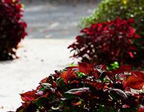Prelude to Autumn - Part 4