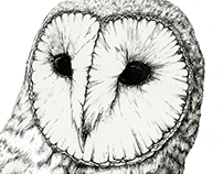 Barn Owl - Pen and Ink Study