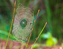 Cobwebs in the meadow