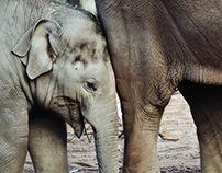 Elephant- Photographs