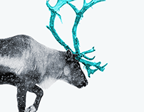 Reindeer's strategy consulting | logo & brand identity