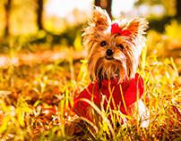 Trufa - Indumentaria para perros - Branding