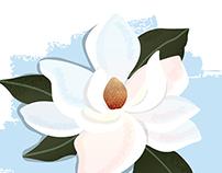 Magnolia grandiflora -- Magnolia