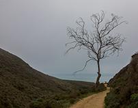 Central Coast Landscapes