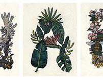 Flora & Fauna ABC