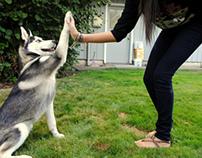 Best Dog Training Tips By Stephanie Taunton