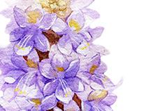 Botanical illustration 植物插圖