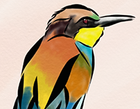 water coloured costarical birds