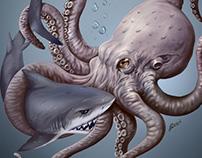 Octopus vs Shark