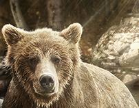 Bear - Urso - Teste