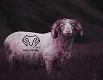 Malasaña