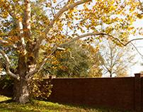 Leaves + Brick