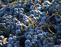 Mt Vernon Wine Estate