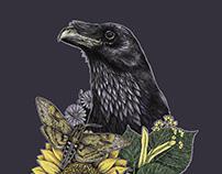 summer raven
