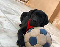 Happy international dog day.