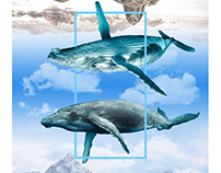 Ocean Sky / Flying Waves