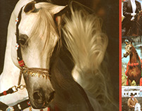 pocket folder - Arizona Arabian Horse Association