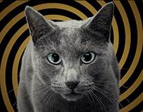 Sheba. Hypno-Cat