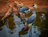 Zoo Bioparc Fuengirola - Málaga