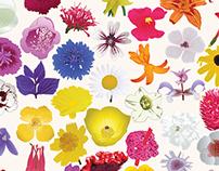 Bloom Animation
