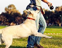 Stephanie Taunton | tips help in dog training