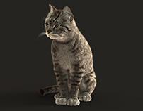 3D Cat (Modeling & rigging) (animation) (FUR)