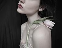 Portrait d'une tulipe.
