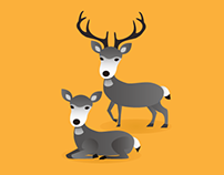 Small Multiples: 12 types of deer-like animals