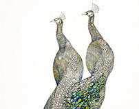 Homosexual Peacocks