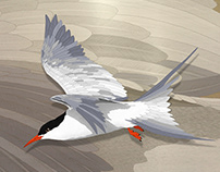 Arctic Tern on liquid brass