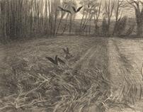 Ravens on a field