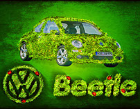 Organic Beetle