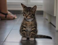 Zelda little model