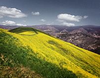 Springtime in California