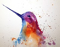 Watercolor - Hummingbird