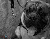 Exposición Canina 2015