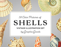 Shells – Vintage Color Illustrations