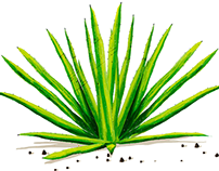 AGAVE ® Illustration