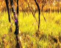 Trees – Fine Art