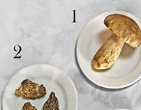 Spring Mushrooms Infographic